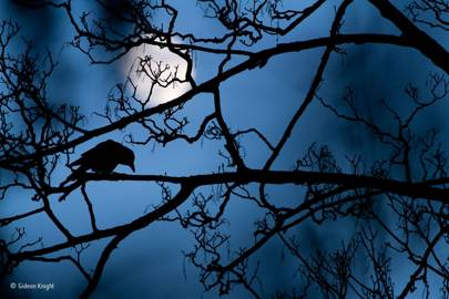 The moon and the crow: winner of Young Wildlife Photographer of the Year