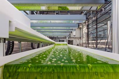 Making fuel out of algae could clean up dirty planes