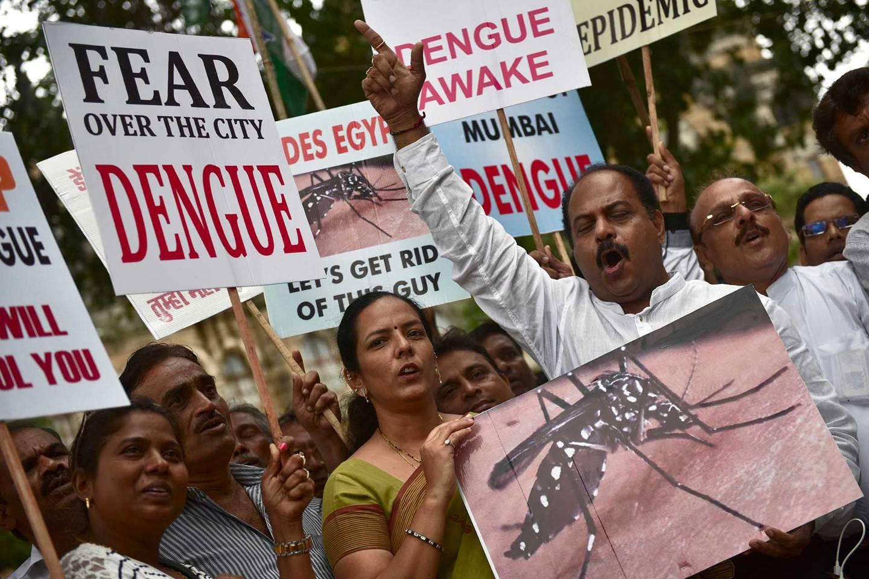 Zika virus: Dengue virus antibodies may make infections worse