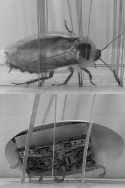 US Army funds horrifying morphing robot cockroach