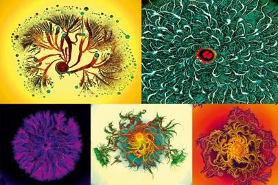 Paenibacillus vortex