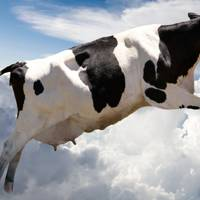 """A super cow flying over clouds"""