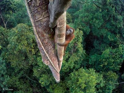 Entwined lives: winner Wildlife Photographer of the Year 2016