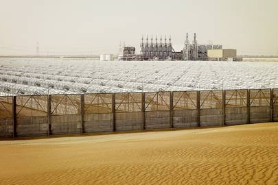 Shams 1 solar power station consists of 768 solar collector assembly units and 27,648 absorber pipes
