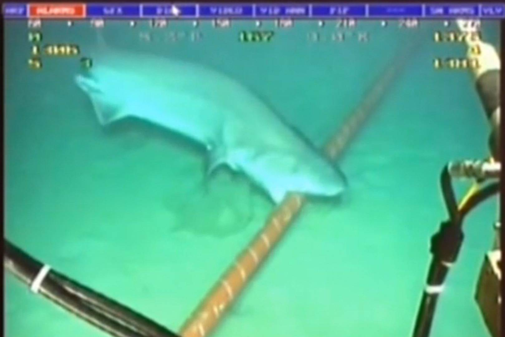 Sharks wage war on undersea internet cables | WIRED UK