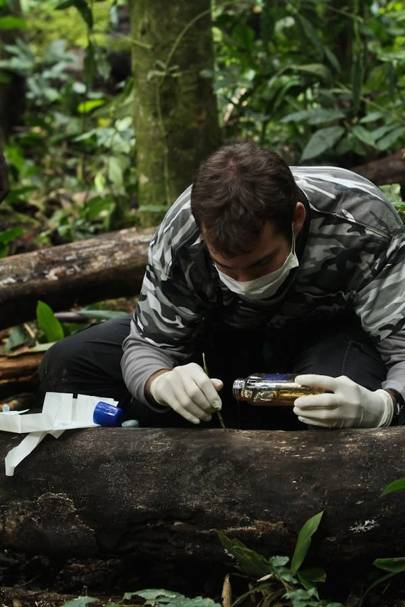 Dr Thibaud Gruber is setting up honey trap experiment for chimps in Kibale National Park