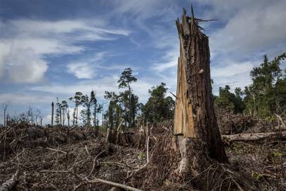 Only drastic action can save us from the sixth mass extinction