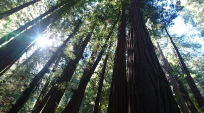 Muir Woods, Marin County, California