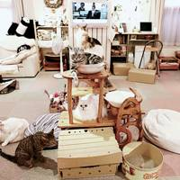Cats in residence at the Cateriam Cat Cafe, Tokyo