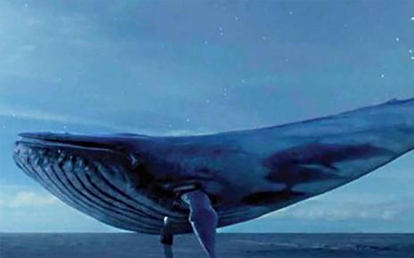 The truth about blue whale wired uk altavistaventures Image collections