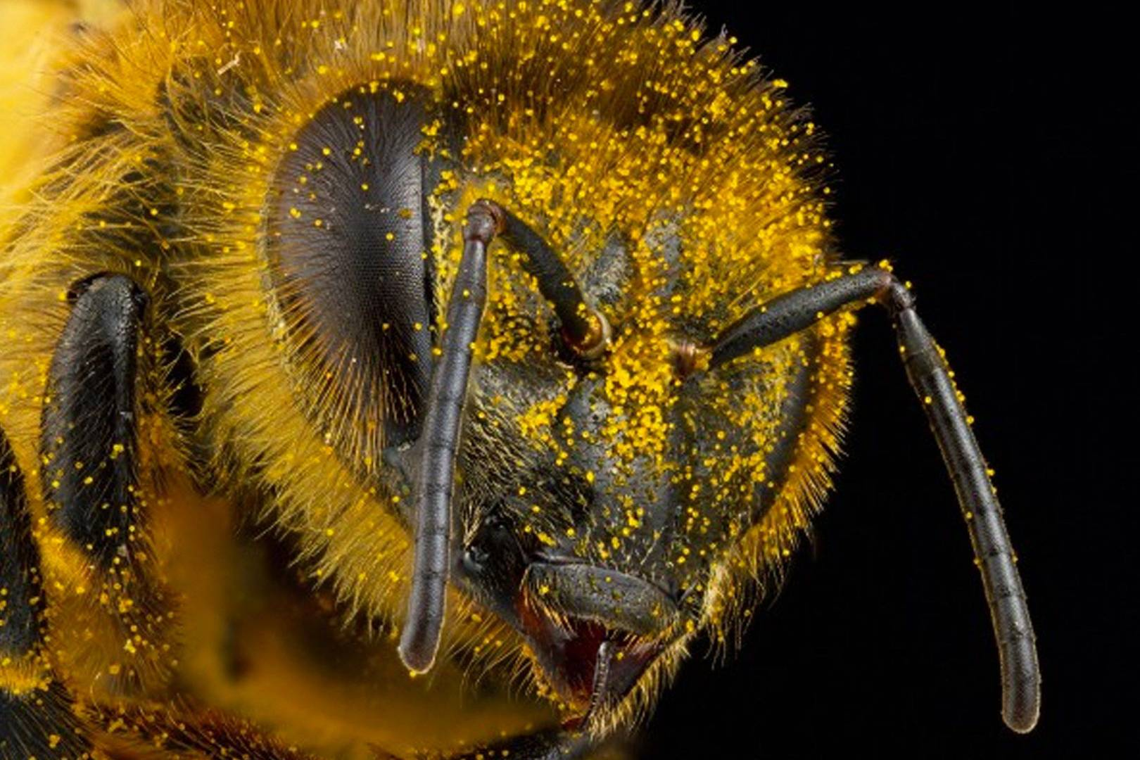Insect photographer squashed by copyright infringement