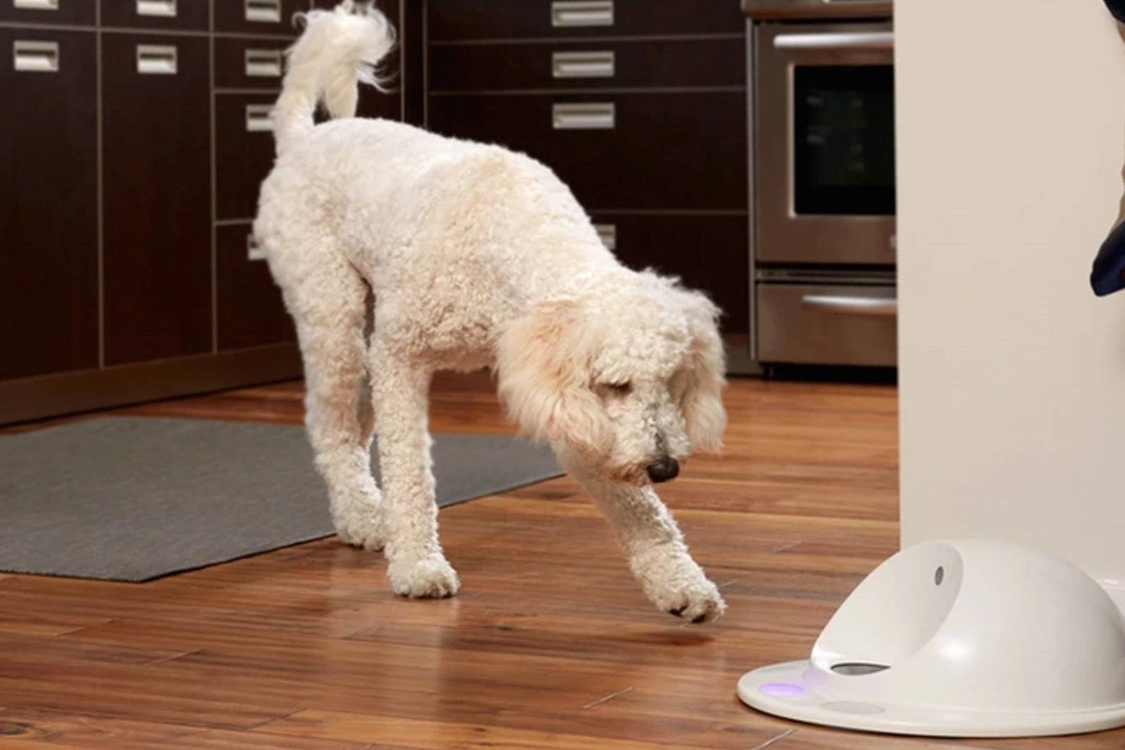 CleverPet is a games console for dogs | WIRED UK