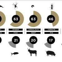 Buggy Data