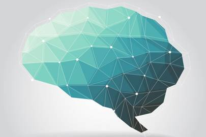 male and female brain differences negligible says rosalind shutterstock