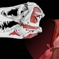 T-Rex bite