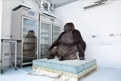 Stuffed animals put in 'rhino-sized' freezer to kill bugs