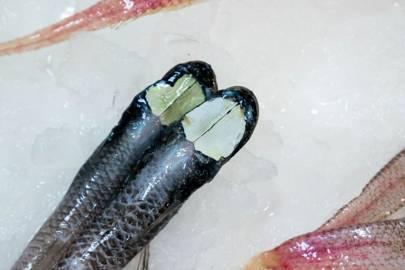 Grideye Spiderfish