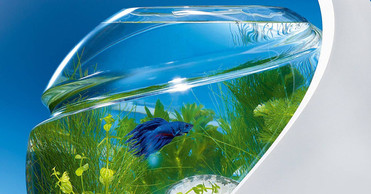 The fish tank that cleans itself wired uk for Avo fish tank