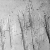 Stereo-microscopic close-up of Jane's jawbone