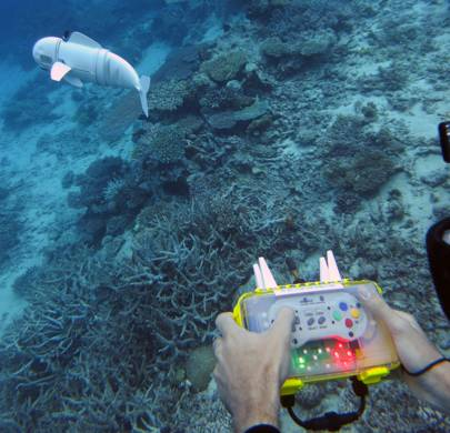 MIT's tiny rubber robo-fish is here to help save the world's coral reefs