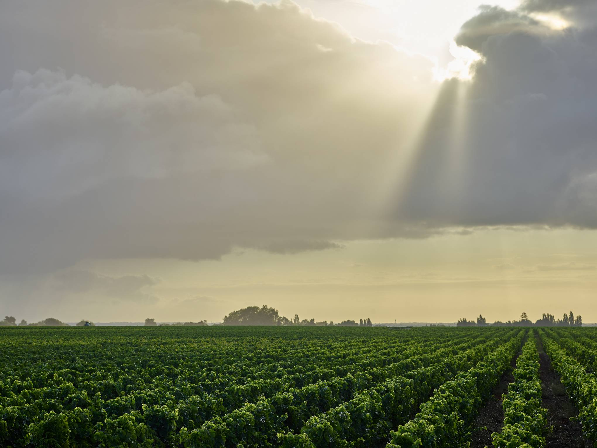 The race is on to stop the climate crisis claiming your favourite wine