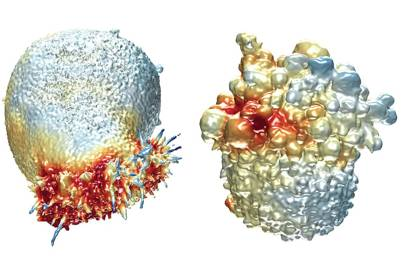 Microscope shows live cancer cells in high resolution 3D