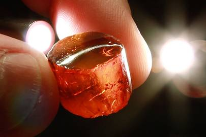 A piece of amber from Milton Sanderson's Caribbean collection