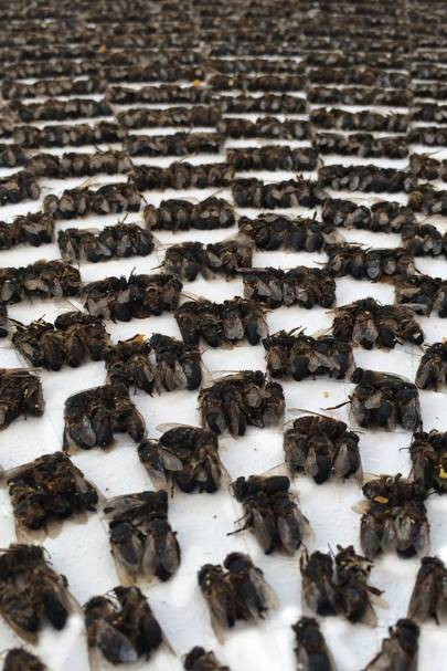 Bee Works_Circle 3