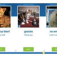Cat Academy Cat Spanish