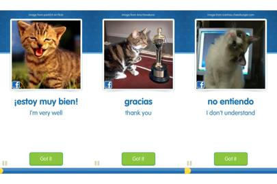 Cat Academy Cat Spanish