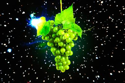 - wired spacegrapes - Scientists are growing grapes in space to save Earth's wine supply