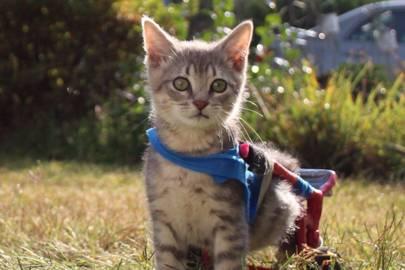 SuperKitten Clark Kent
